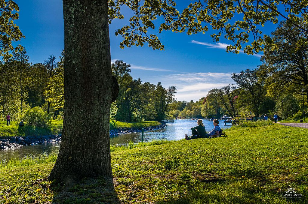 Tree_and_people_at_Djurgården,_east_of_Stockholm_(Sweden)_-_panoramio